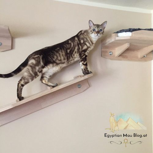 spielplatz f r katzen eine kletterwand egyptian mau katzenblog. Black Bedroom Furniture Sets. Home Design Ideas